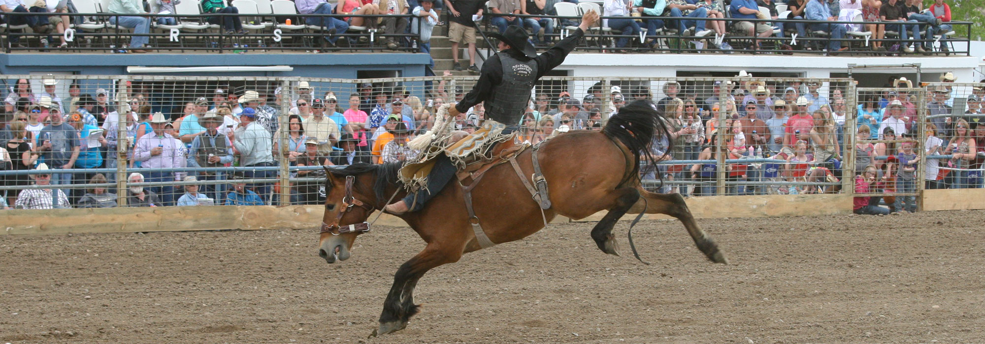 slider – Bucking Horse
