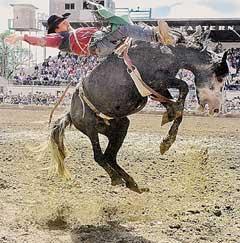 Bucking Horse Sale