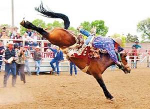 Annual Bucking Horse Sale